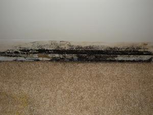 wall-mold